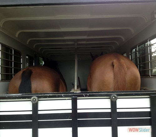 The big boys heading off for a lesson.